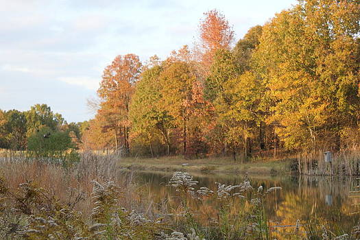 Fall Colors by Charlotte Craig