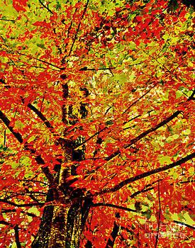 Jeff McJunkin - Fall Colors II