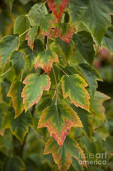 Charmian Vistaunet - Fall Colors in Oregon