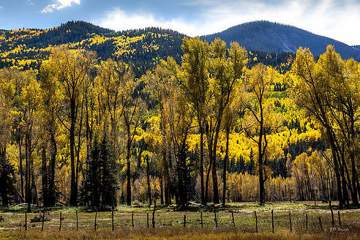 Fall Colors by Julie Basile