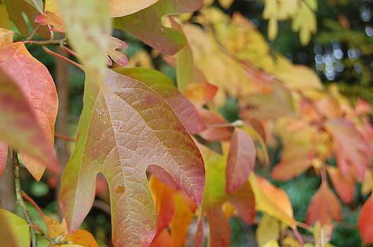 Fall Colors by Lisa Lamir