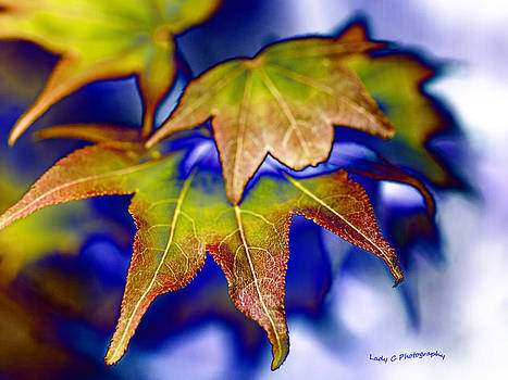 Maureen Cunningham - Fall Colors