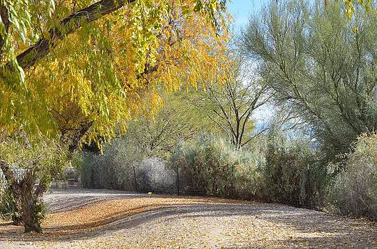 Fall Colors by Old Pueblo Photography