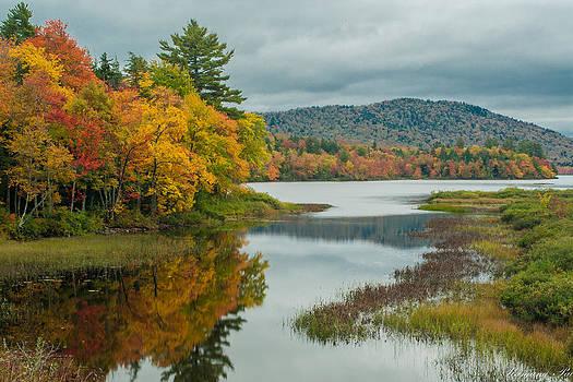 Fall Colors by Ranjana Pai