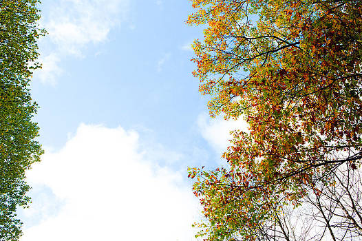 Fall Colors by Saibal Ghosh