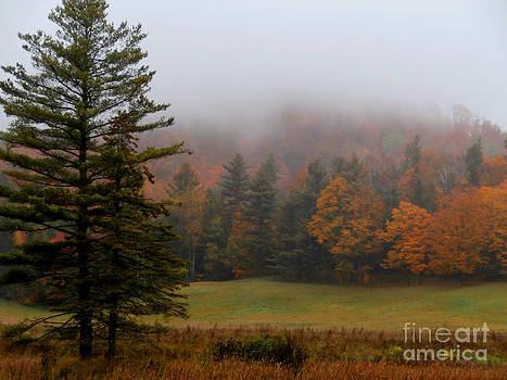 Fall colors by Steven Valkenberg