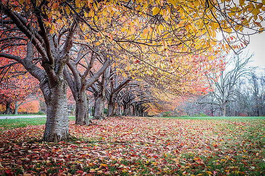 Fall Colors by Theodore Lewis