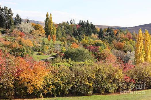 Fall Colors U of I Arboretum I by Linda Meyer