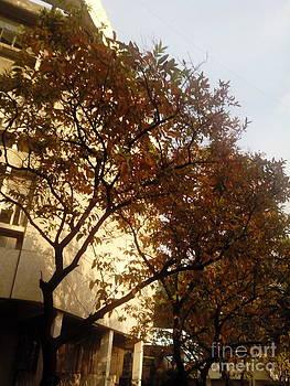 Fall Colours by Bgi Gadgil
