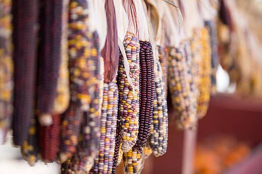 Fall Corn 2 by Gerald Adams