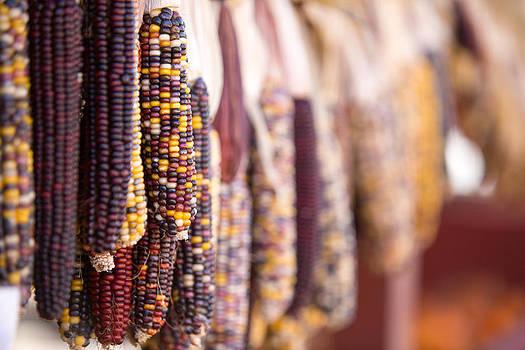 Fall Corn  by Gerald Adams