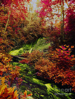 Fall Creek Fastasy by Annette Allman