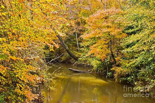 Michael Tidwell - Fall Creek Foliage