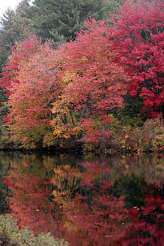 Fall by Donna Desrosiers