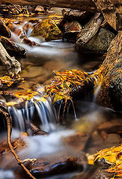 Fall Downstream by Kevin Rowe