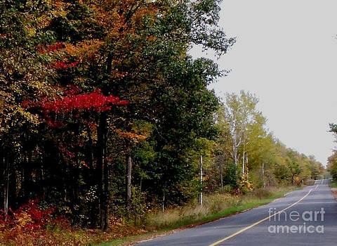Gail Matthews - Fall Drive Color Tour