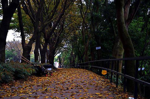 Fall by Enrique Rueda