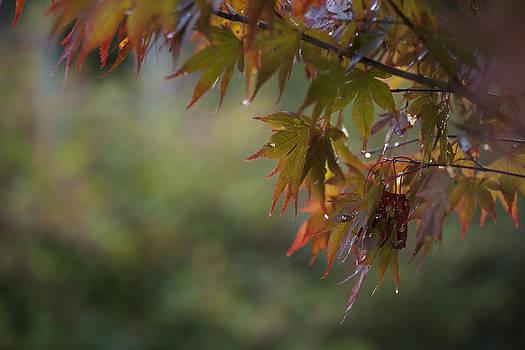 Fall Fantasy by Jane Eleanor Nicholas