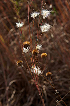 Fall Feathers by Jane Eleanor Nicholas