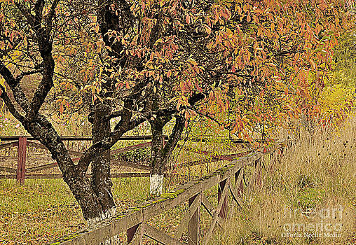 Fall Fenced by Tonia Noelle