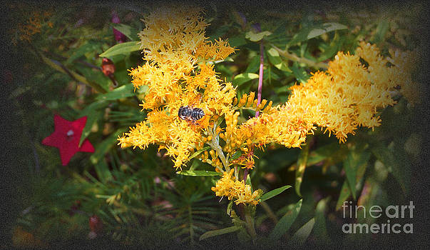 Fall Field Flowers by Kim Pate