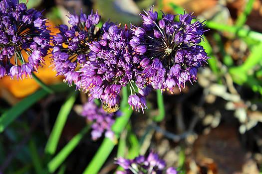 Carolyn Stagger Cokley - fall flower