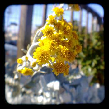 Fall flower - Through the Viewfinder  by Gemma Geluz