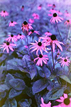Fall Flowers at Lake Kanasatka by Lon Casler Bixby