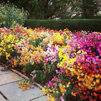 Fall Flowers  by Kathleen Anderle