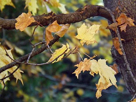 Fall Foilage by Brenda Brown