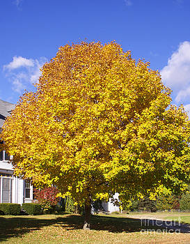 Michael Mooney - Fall Foliage 9272013