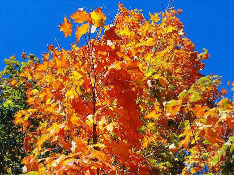 Fall Foliage Against A Blue Sky by Lisa Gifford