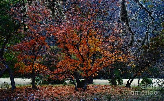 Michael Tidwell - Fall Foliage at Lost Maples State Park
