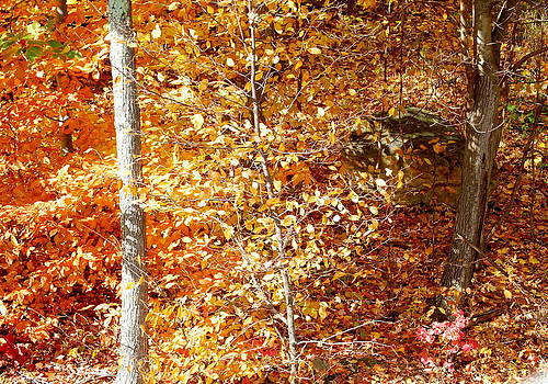 Linda Rae Cuthbertson - Fall Foliage - Crisp Golden Leaves