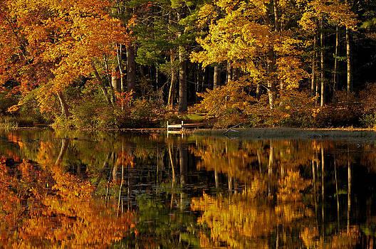 Fall Foliage Dock by Liz Mackney
