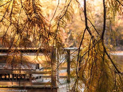 Fall foliage  by Kim Loftis