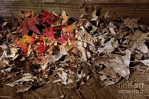 Fall Foliage's Crayon Box by Scott Allison