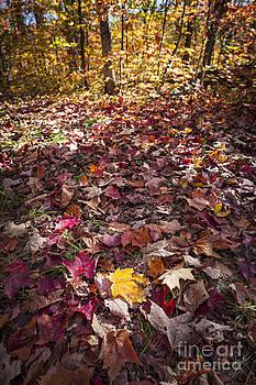 Elena Elisseeva - Fall forest floor