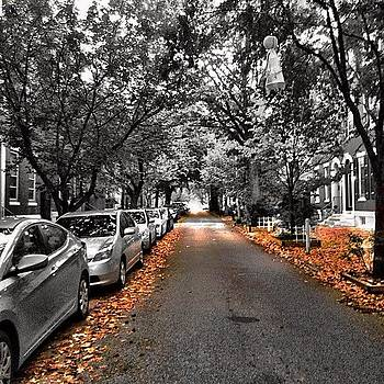#fall Friday 🍁🍂🍁 #colorsplash by Dan  Diamond