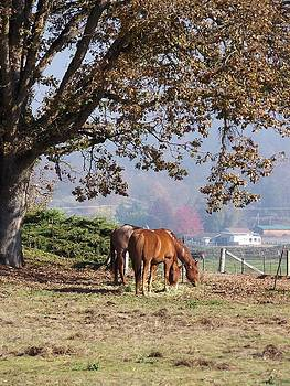 Fall Grazing by Cynthia Riley