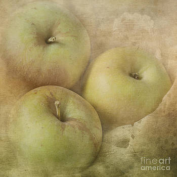 Fall Harvest by Pam  Holdsworth