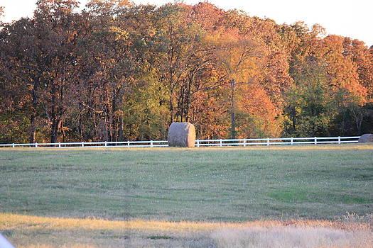 Fall Hay Meadow by Charlotte Craig