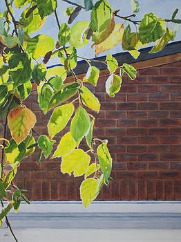 Fall by Helal Uddin