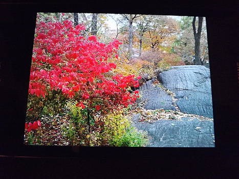 Fall in Central Park by Theresa Crawford