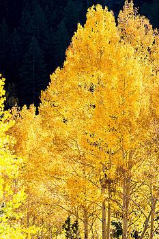 Fall in Colorado by Colleen Coccia