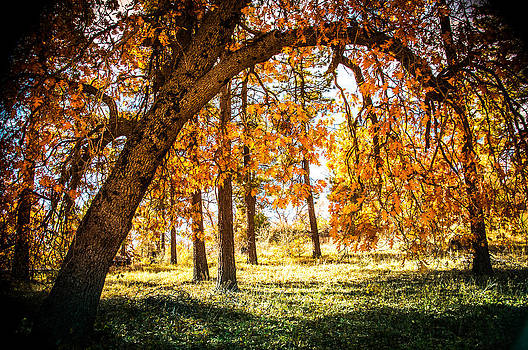 Fall in Laguna by Mickey Clausen