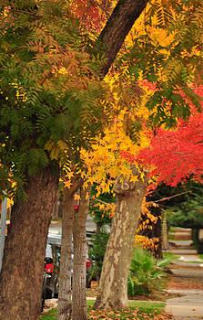 Fall in Sacramento by Mischelle Lorenzen