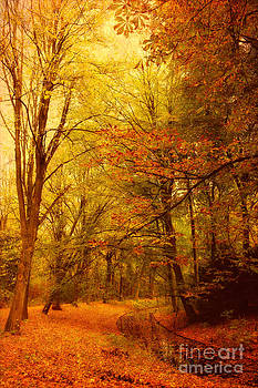 LHJB Photography - Fall in the forest
