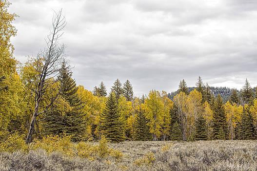 Fall in the Grand Teton Valley by Paul W Sharpe Aka Wizard of Wonders