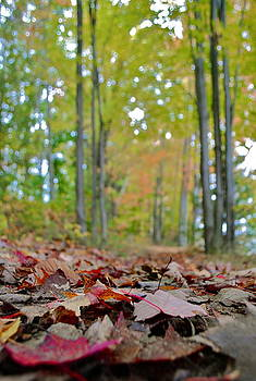 Fall in the woods by Amanda Letcavage